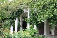 ローズパーティーのお知らせ - 元木はるみのバラとハーブのある暮らし・Salon de Roses