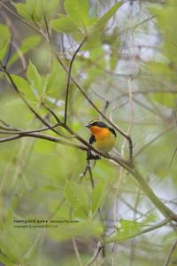 いつもの峠巡り2017春① - healing-bird