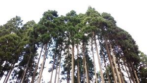 森の中にこんな木を見つけました - くつきの森フォトレター