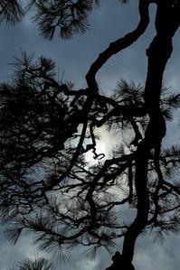 太陽を抱いて - memory