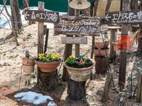 春の花のシーズン到来!クロッカス開花、プリムラ・ビオラを植え付け。 - 十勝・中札内村「森の中の日記」~café&宿カンタベリー~