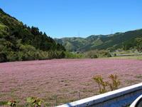 新緑のドライブ - 皿倉山の見える家