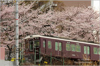 '17 桜*Ⅵ -電車- - It's only photo