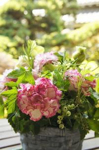 母の日のフラワーギフトのお知らせ - Groseille グロゼイユ~四季のお庭とぼちぼちお花活動~