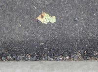 道路に落ち葉のアート? - のんびり街さんぽ