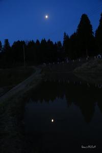 月と六文銭 - A primrose by the river's brim