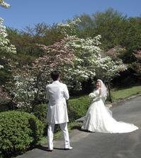 白ドレス&ライトブルードレスのブーケ♪ - デイジーのひとりごと