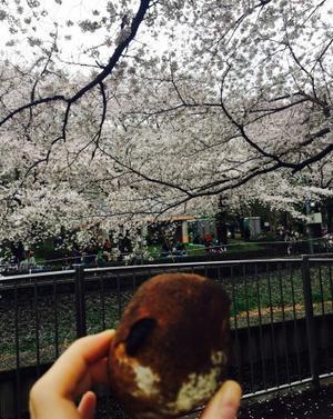 善福寺川で花見パン - NO PAN NO LIFE