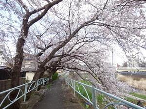 春真っ盛りの盛岡 - 岩井沢工務所の現場日記