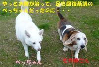 またもや不調・・・>< - もももの部屋(家族を待っている保護犬たちと我家の愛犬のブログです)