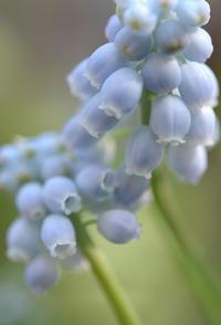 お庭で咲いたお花たち - my story***