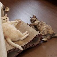 季節の狭間 - 賃貸ネコ暮らし 賃貸住宅でネコを室内飼いする工夫