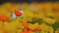 春の花たち - けちけちオヤジのお気楽ダイアリーズ