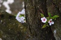 Spring. - nobiru-photo