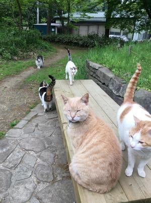積極猫寄 - 真実はどこにあるの?