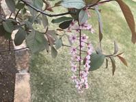 庭の花 - sakurairo