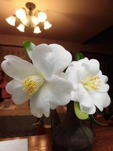 1年ぶりに・・・・・ - mr&mrs kajiの小さなバラの庭