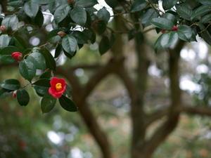 椿の森2 - 心の色~光生写真館~