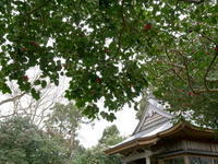 椿の森3 - 心の色~光生写真館~