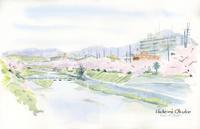 高野川の桜並木(未完) - 風と雲