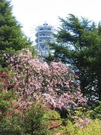 花降る街、仙台 - 花と写真と