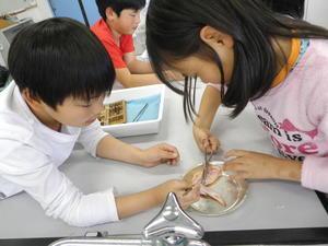 動物の体 - 大島町立つつじ小学校