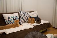 猫柄クッション - にゃんず日記