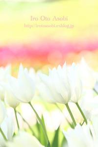 dazzling white - 色音あそび