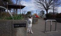 Vol.1173 綱島東二丁目公園 - 小太郎の白っぽい世界
