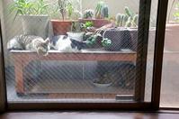 最近の猫事情24 - 鳥会えず猫生活