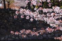 カメラを持ってお出かけ☆しつこく松本城葉桜編 - my small garden~sugar plum~