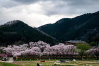 Sakura2017 *03 / 笠置の桜 - noBBy's *PhotoLabo*