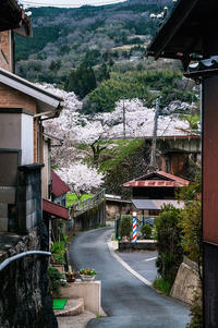 Sakura2017 *04 / 笠置の桜 - noBBy's *PhotoLabo*