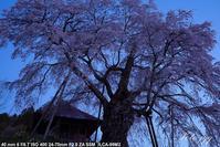 上石の不動桜 郡山市中田町 ・・・ - ぶらりカメラウォッチ・・