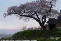小沢の桜 田村市船引町 ・・・ - ぶらりカメラウォッチ・・