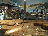 ティラノサウルスなど恐竜の全身骨格 ~福井県立恐竜博物館(3) - 模糊の旅人