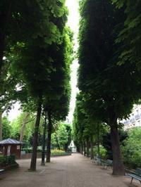 小雨、緑が濃い - riri