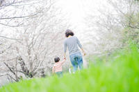 #100 桜道 - 春がきた