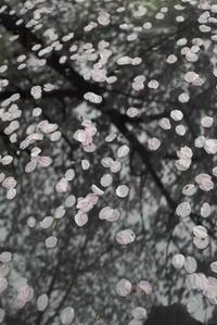 「春の終わり」 - hal@kyoto