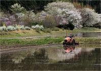 ☆ 桜満開の津具村 ☆ - 気ままなフォトライフ