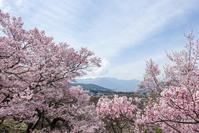 桜満開!高遠ライド4 - photophobia