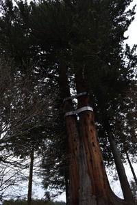 巨木 - 残りの人生楽しく行こう