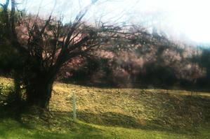 今年のゴールデンウィークは暇なので、桜をのんびり撮影して過ごそうか。 - 不思議空間「遠野」 -「遠野物語」をwebせよ!-