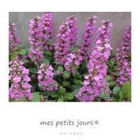 花壇の花 - 小さな日々*