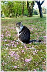 花模様 と せいこちゃん・・・ さくら散歩17 - 日々楽しく ♪mon bonheur