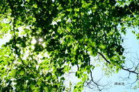 おとめ山公園 - 錦眼鏡