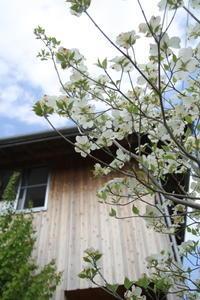 庭4年目。庭づくりをふりかえる① - ササキサキコdialy 家の話、本の話