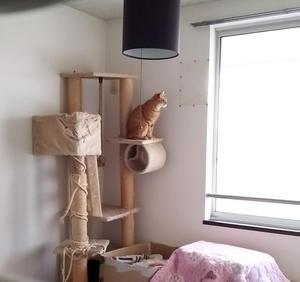 【里親決定の猫】たらみちゃんは、ゆずちゃんに。 - 猫と一緒に。
