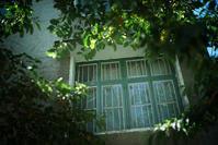 緑の窓 - 記憶の創造
