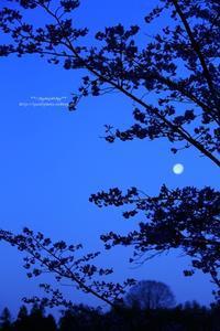 吉野の月 - ** shympathy **